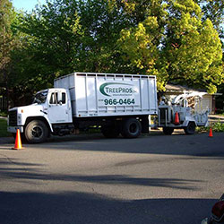Tree Removal	Roseville CA